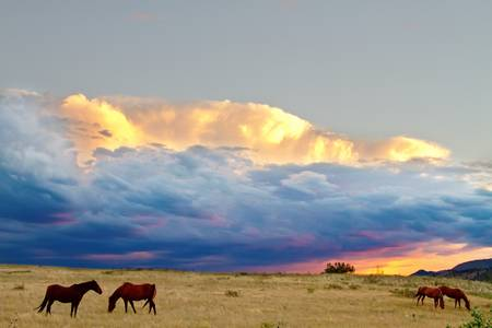 Horses On The Storm