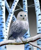 BLUE-EYED SNOW OWL