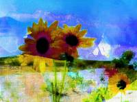 daisies and lake canvas art