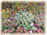 flowerbed illustration