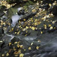 autumn flow by julie scholz