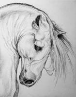 Andalusian Horse pencil art portrait