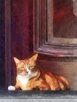 Cats - Orange Tabby in Doorway