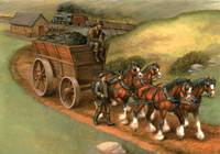 Clydesdales Pulling Coal
