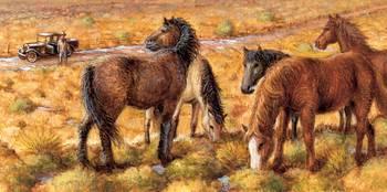 North American Curly Horses
