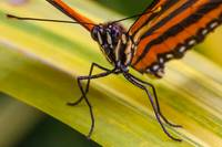 orange butterfly close up