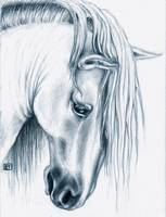 Andalusian Horse portrait