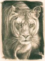 Lioness Lithograph
