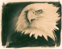 American Bald Eagle Lithograph