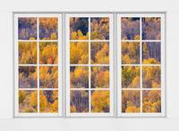 Autumn Aspen Trees White Picture Window View