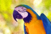 portrait of a macaw.