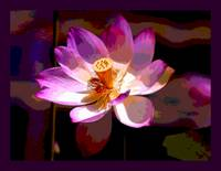 Lotus Enhanced large border