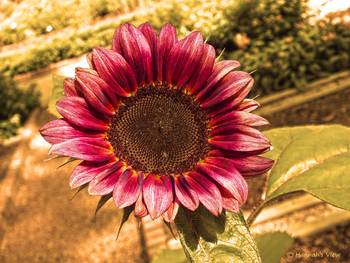 auntmn bloom by hannah underhill