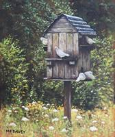 White Doves using a Dovecote