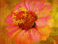 Zinnia with Pink Petals Floral Wall Art