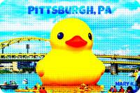 Pittsburgh Duck