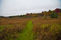Northern Fields In Fall