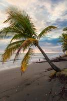 palm tree on a deserted beach