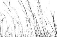 Wild Grasses Abstract