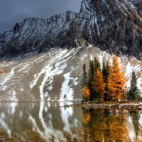 Larch Lights by Thirteenth Avenue Photography