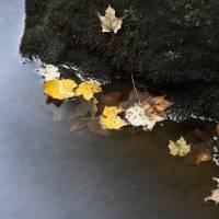 autumn drift by julie scholz