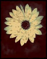 Daisy image, spattered, edged in black