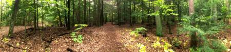 Panoramic in the Woods