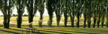 Lawn With Sprinklers Poplar Trees and Wheat Fields