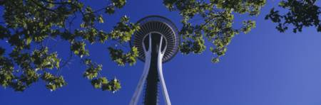 Space Needle Maple Trees Seattle Center Seattle WA