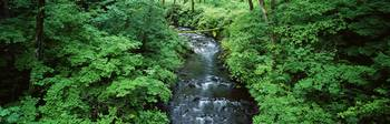Stream flowing through lush green brush