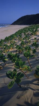 Plants on the beach