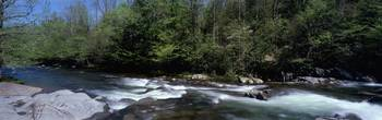 Little Pigeon River Great Smoky Mtns National Par