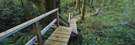 High angle view of an elevated wooden path passin