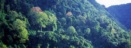 Rainforest St Lucia Windward Islands