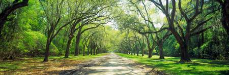 Wormsloe Historic Site Savannah GA