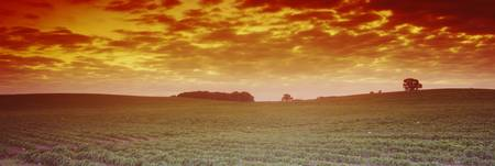 Clouds over a soybean field