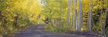 Fall road Telluride CO
