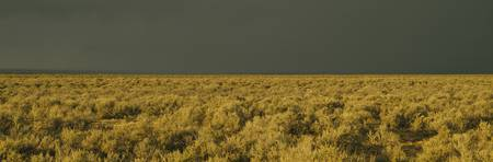 Storm cloud over a field of sagebrush