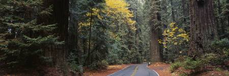 Road Redwood National Forest CA