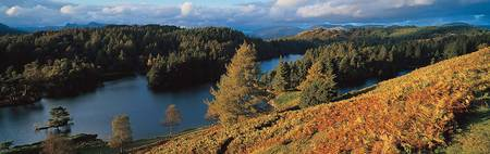 Tarn Hows Cumbria The Lake District England