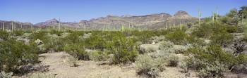 Sonoran Desert Organ Pipe Cactus National Mon AZ