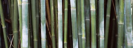 Close up of bamboos