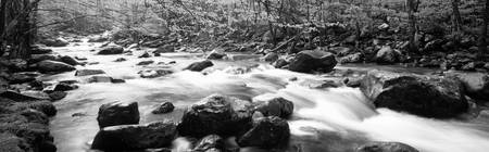 Little Pigeon River Great Smoky Mts National Park