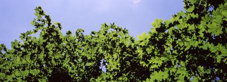 Low angle view of leaves against the sky