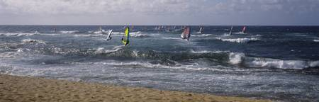 Windsurfing boards in the sea
