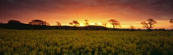 Rape field Tayside Scotland