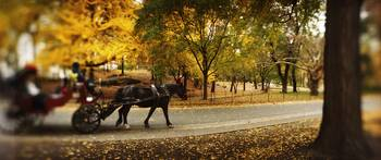 Horse drawn carriage in a park Central Park Manha