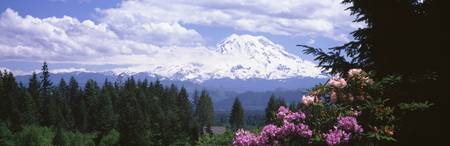 Mount Rainier and spring rhododendrons Graham WA