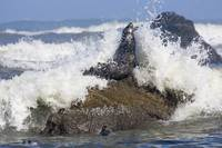 Wave Crashing Around Seal On Rock