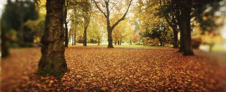 Fallen leaves in a park Volunteer Park Capitol Hi